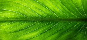 Requisiti e responsabilità dei profili professionali che operano nell'ambito della sostenibilità